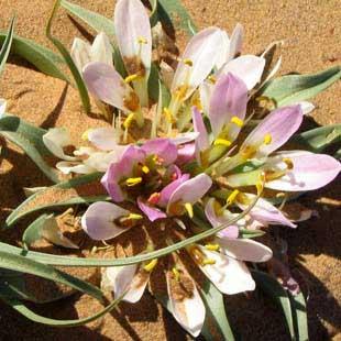 adventour - marocco - deserto fiorito