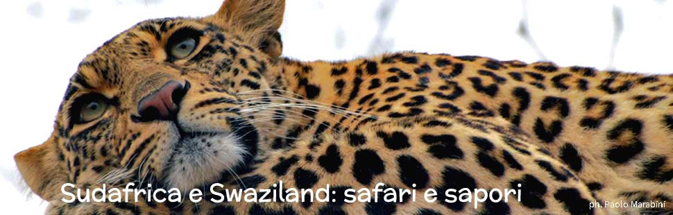 3_adventour_sudafrica_swaziland_safari_sapori
