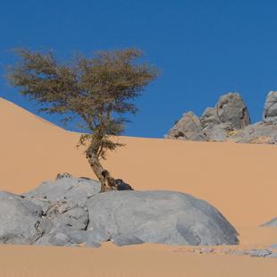 1 adventour_marocco_deserto_duna_05