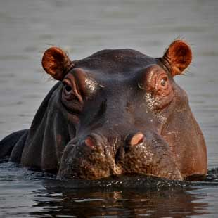 1_adventour_botswana_okavango_01