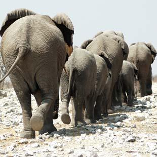 1_adventour_namibia_elefanti_damaraland