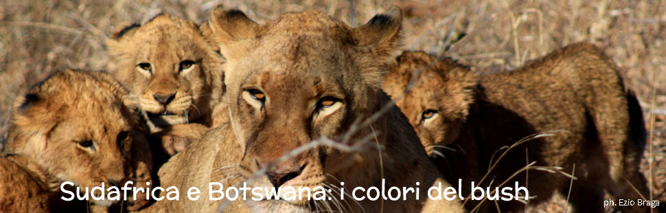 3_adventour_sudafrica_botswana_colori_del_bush