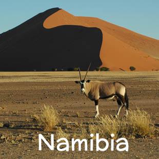 Un emozionante viaggio sulle strade della Namibia, alla scoperta di un territorio dai grandi spazi, dove gli orizzonti sono sconfinati e la natura regna incontrastata. Il viaggio inizia e termina a Windhoek e passa per l'Etosha National Park, il Damaraland, la Costa Atlantica, Cape Cross, Swakopmund, Walvis Bay e il Namib Naukluft Park, con le dune più alte del mondo.