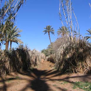 1_adventour_marocco_valle_draa_2