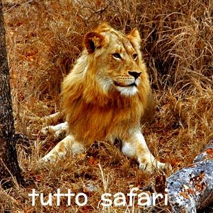Scopri l'emozione di una giornata in safari e comincia a sognare la tua vacanza africana.